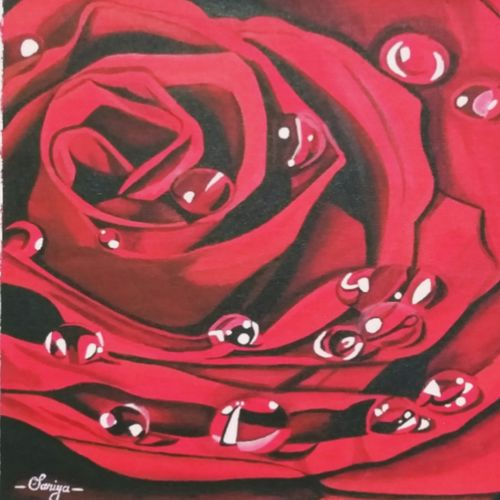 rose with water droplets, 17 x 12 inch, saniya mohite,17x12inch,canvas,flower paintings,paintings for dining room,paintings for living room,paintings for bedroom,paintings for office,paintings for hotel,paintings for dining room,paintings for living room,paintings for bedroom,paintings for office,paintings for hotel,acrylic color,GAL02777939468