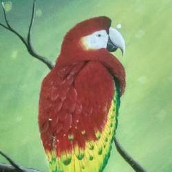 the scarlet macaw, 16 x 18 inch, suchitra polamuri,16x18inch,canvas board,paintings,nature paintings | scenery paintings,animal paintings,paintings for living room,paintings for living room,acrylic color,GAL02583639504