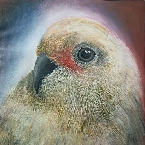 melancholic , 20 x 23 inch, giridharan p,20x23inch,canvas,paintings,animal paintings,paintings for dining room,paintings for living room,oil color,GAL02788139667