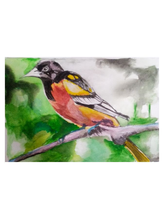 sage bird, 12 x 16 inch, rajinder koul,12x16inch,thick paper,paintings,abstract paintings,wildlife paintings,conceptual paintings,nature paintings   scenery paintings,photorealism paintings,photorealism,paintings for dining room,paintings for living room,paintings for bedroom,paintings for bathroom,paintings for kids room,paintings for hotel,paintings for kitchen,paintings for school,watercolor,paper,GAL01404539728
