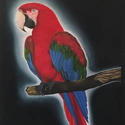macaw bird, 24 x 49 inch, dipal rathod,24x49inch,canvas,paintings,wildlife paintings,nature paintings | scenery paintings,paintings for dining room,paintings for living room,paintings for bedroom,paintings for office,paintings for kids room,paintings for hotel,paintings for kitchen,paintings for school,paintings for hospital,acrylic color,GAL02852840251