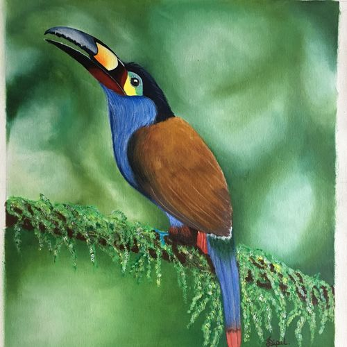 toucan bird , 17 x 19 inch, dipal rathod,17x19inch,canvas,paintings,wildlife paintings,modern art paintings,conceptual paintings,nature paintings   scenery paintings,art deco paintings,animal paintings,paintings for dining room,paintings for living room,paintings for bedroom,paintings for office,paintings for hotel,paintings for school,paintings for hospital,acrylic color,GAL02852840254