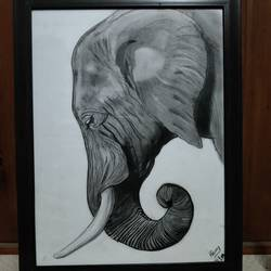 matriarch, 12 x 17 inch, nancy agarwal,12x17inch,canson paper,drawings,figurative drawings,paintings for living room,paintings for office,paintings for hotel,paintings for school,paintings for hospital,charcoal,graphite pencil,paper,GAL02857240366