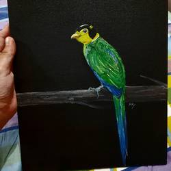 long tailed broadbill, 10 x 12 inch, sanchita nayak,10x12inch,canvas,paintings,nature paintings | scenery paintings,paintings for dining room,paintings for living room,acrylic color,GAL01274240492