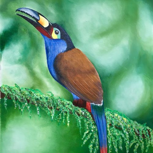 bird painting (toucan), 17 x 19 inch, dipal rathod,17x19inch,canvas,paintings,wildlife paintings,modern art paintings,nature paintings | scenery paintings,animal paintings,paintings for dining room,paintings for living room,paintings for office,paintings for bathroom,paintings for kids room,paintings for hotel,paintings for kitchen,paintings for school,paintings for hospital,acrylic color,oil color,GAL02852840806