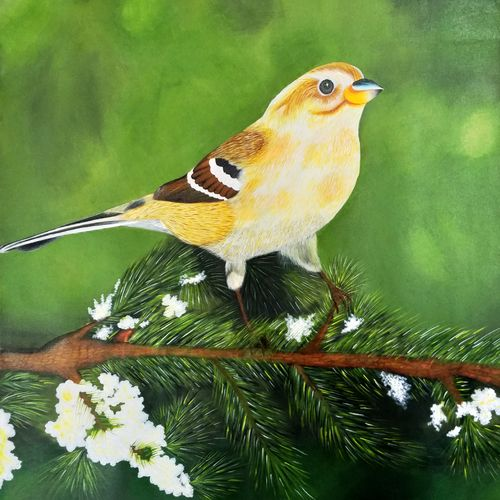 sparrow, 24 x 24 inch, sneha petkar,24x24inch,canvas,paintings,wildlife paintings,nature paintings | scenery paintings,photorealism paintings,photorealism,realism paintings,animal paintings,realistic paintings,paintings for dining room,paintings for living room,paintings for bedroom,paintings for office,paintings for hotel,paintings for hospital,acrylic color,GAL02902141219