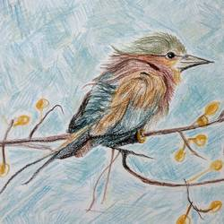 a marvelous bird, 12 x 8 inch, manan sheel,12x8inch,drawing paper,drawings,realism drawings,pencil color,GAL02892741265