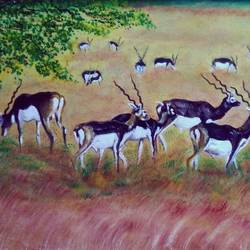 black bucks, 24 x 16 inch, mehul boricha,24x16inch,canvas board,paintings,wildlife paintings,photorealism paintings,animal paintings,paintings for dining room,paintings for living room,paintings for bedroom,paintings for office,paintings for kids room,paintings for hotel,paintings for school,paintings for dining room,paintings for living room,paintings for bedroom,paintings for office,paintings for kids room,paintings for hotel,paintings for school,oil color,GAL02737741283