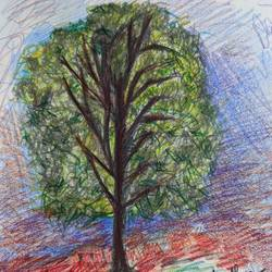 a lush tree, 8 x 12 inch, manan sheel,8x12inch,drawing paper,drawings,expressionism drawings,pencil color,GAL02892741318