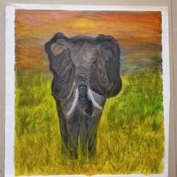 now you see me , 20 x 18 inch, suman raghunathan,20x18inch,canvas,paintings,wildlife paintings,oil color,GAL02870041474