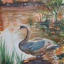 swan at twilight , 12 x 17 inch, anshuman sikka,12x17inch,thick paper,paintings,wildlife paintings,nature paintings | scenery paintings,love paintings,paintings for living room,paintings for bedroom,paintings for office,paintings for hotel,watercolor,GAL02997242140