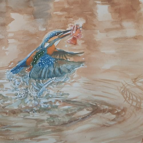 kingfisher catches a fish, 17 x 12 inch, anshuman sikka,17x12inch,thick paper,paintings,wildlife paintings,landscape paintings,nature paintings | scenery paintings,art deco paintings,impressionist paintings,animal paintings,water fountain paintings,paintings for dining room,paintings for living room,paintings for bedroom,paintings for office,paintings for kids room,paintings for hotel,paintings for kitchen,paintings for school,paintings for hospital,watercolor,GAL02997242196