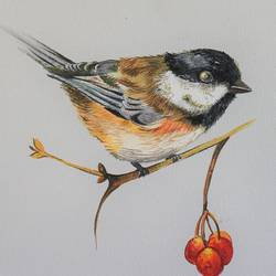 bird painting , 12 x 12 inch, indiarts india,12x12inch,canvas,paintings,animal paintings,paintings for dining room,paintings for living room,paintings for bedroom,paintings for kids room,paintings for hotel,paintings for kitchen,acrylic color,GAL02992042323