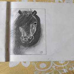 horse mane, 5 x 8 inch, dilprit ahuja,5x8inch,drawing paper,drawings,fine art drawings,realism drawings,paintings for dining room,paintings for living room,paintings for bedroom,paintings for office,paintings for hotel,paintings for kitchen,paintings for school,paintings for hospital,pencil color,graphite pencil,GAL03019842410