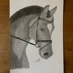 horse, 8 x 12 inch, anirudh sethi,8x12inch,ivory sheet,fine art drawings,impressionist drawings,modern drawings,realism drawings,charcoal,graphite pencil,paper,GAL02942042515