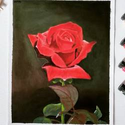 red rose, 8 x 12 inch, suma sirisha,8x12inch,canvas,paintings,flower paintings,expressionism paintings,photorealism,realism paintings,realistic paintings,paintings for dining room,paintings for living room,paintings for bedroom,paintings for office,paintings for bathroom,paintings for kids room,paintings for hotel,paintings for kitchen,paintings for school,paintings for hospital,acrylic color,GAL03021542593