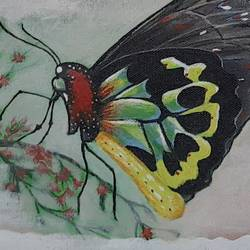 butterfly, 12 x 12 inch, preeti kadu,12x12inch,canvas,paintings,nature paintings | scenery paintings,animal paintings,paintings for dining room,paintings for living room,paintings for bedroom,paintings for office,paintings for bathroom,paintings for kids room,paintings for hotel,paintings for kitchen,paintings for school,paintings for hospital,acrylic color,GAL03077643177