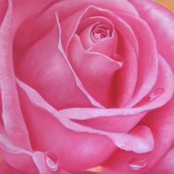 dews on rose, 21 x 15 inch, dinak divakaran,still life paintings,paintings for living room,love paintings,canvas,oil,21x15inch,GAL0229434heart,family,caring,happiness,forever,happy,trust,passion,romance,sweet,kiss,love,hugs,warm,fun,kisses,joy,friendship,marriage,chocolate,husband,wife,forever,caring,couple,sweetheart