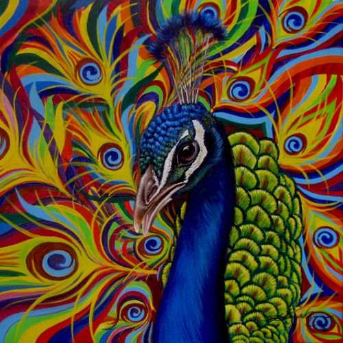 peacock, 26 x 19 inch, dinak divakaran,conceptual paintings,paintings for living room,wildlife paintings,paintings for dining room,paintings for bedroom,paintings for office,canvas,acrylic color,26x19inch,GAL0229437