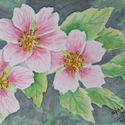 pink flowers , 24 x 15 inch, ajay anand,24x15inch,handmade paper,paintings,flower paintings,paintings for dining room,paintings for bedroom,paintings for office,paintings for bathroom,paintings for kids room,watercolor,GAL01783943787