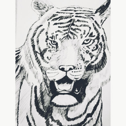 tiger sketch, 42 x 30 inch, soumya  srivastava,42x30inch,thick paper,paintings for dining room,paintings for living room,paintings for bedroom,paintings for office,paintings for kids room,paintings for hotel,paintings for school,portrait drawings,paintings for dining room,paintings for living room,paintings for bedroom,paintings for office,paintings for kids room,paintings for hotel,paintings for school,charcoal,GAL03089443803