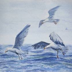 seagulls, 18 x 14 inch, ram mohan e,18x14inch,paper,paintings,wildlife paintings,nature paintings | scenery paintings,impressionist paintings,paintings for dining room,paintings for living room,paintings for bedroom,paintings for office,paintings for kids room,paintings for hotel,paintings for school,watercolor,GAL069744142