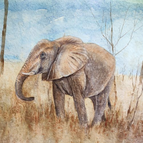 elephant, 18 x 14 inch, ram mohan e,18x14inch,paper,paintings,wildlife paintings,landscape paintings,nature paintings | scenery paintings,impressionist paintings,animal paintings,elephant paintings,paintings for dining room,paintings for living room,paintings for office,paintings for kids room,paintings for hotel,paintings for school,watercolor,GAL069744519