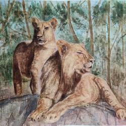 lions, 18 x 14 inch, ram mohan e,18x14inch,paper,paintings,wildlife paintings,landscape paintings,nature paintings | scenery paintings,impressionist paintings,animal paintings,paintings for dining room,paintings for living room,paintings for office,paintings for kids room,paintings for hotel,paintings for school,watercolor,GAL069744520