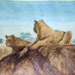 lions, 18 x 14 inch, ram mohan e,18x14inch,paper,paintings,wildlife paintings,landscape paintings,nature paintings | scenery paintings,impressionist paintings,animal paintings,paintings for dining room,paintings for living room,paintings for office,paintings for kids room,paintings for hotel,paintings for school,watercolor,GAL069744521