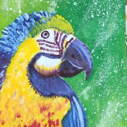 macaw parrot, 9 x 14 inch, dr.foram panchal,9x14inch,drawing paper,paintings,illustration paintings,paintings for dining room,paintings for living room,paintings for office,paintings for kids room,paintings for hotel,paintings for school,paintings for hospital,acrylic color,poster color,watercolor,paper,GAL03170544680