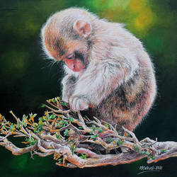 baby monkey, 14 x 10 inch, muralidhar suvarna,14x10inch,cartridge paper,drawings,realism drawings,paintings for dining room,paintings for living room,paintings for bedroom,paintings for office,paintings for kids room,paintings for school,paintings for hospital,acrylic color,mixed media,pencil color,paper,GAL0456944684
