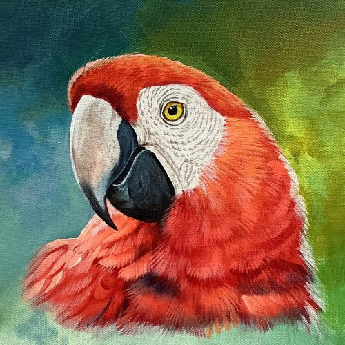 scarlet macaw parrot (artoholic), 24 x 24 inch, artoholic p,24x24inch,canvas,paintings,abstract paintings,wildlife paintings,figurative paintings,portrait paintings,nature paintings | scenery paintings,abstract expressionism paintings,art deco paintings,expressionism paintings,illustration paintings,impressionist paintings,minimalist paintings,photorealism paintings,photorealism,portraiture,realism paintings,realistic paintings,miniature painting.,paintings for dining room,paintings for living room,paintings for bedroom,paintings for office,paintings for kids room,paintings for hotel,paintings for kitchen,paintings for school,paintings for hospital,acrylic color,GAL02078844823