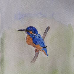 lone bird, 7 x 10 inch, remya george,7x10inch,fabriano sheet,paintings,wildlife paintings,nature paintings | scenery paintings,animal paintings,paintings for living room,paintings for school,paintings for living room,paintings for school,watercolor,GAL03212244933