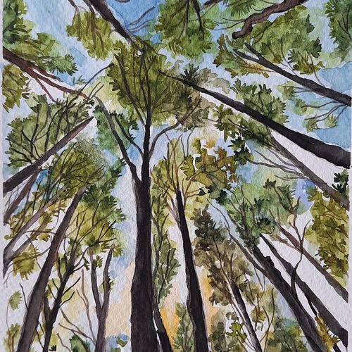 tree canopy, 7 x 10 inch, remya george,7x10inch,fabriano sheet,nature paintings   scenery paintings,paintings for dining room,paintings for living room,paintings for bedroom,paintings for office,paintings for bathroom,paintings for kids room,paintings for hotel,paintings for school,paintings for dining room,paintings for living room,paintings for bedroom,paintings for office,paintings for bathroom,paintings for kids room,paintings for hotel,paintings for school,watercolor,GAL03212244939