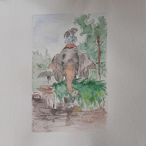 elephant, 12 x 12 inch, remya george,12x12inch,brustro watercolor paper,paintings,wildlife paintings,nature paintings   scenery paintings,paintings for dining room,paintings for living room,paintings for bedroom,paintings for office,paintings for bathroom,paintings for kids room,paintings for hotel,paintings for school,watercolor,GAL03212244941