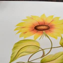 sunflower, 8 x 11 inch, karishma  shah,8x11inch,thick paper,drawings,fine art drawings,pencil color,GAL03011445306