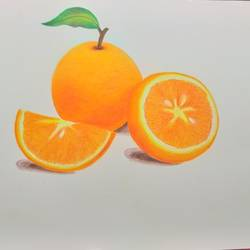 oranges, 8 x 11 inch, karishma  shah,8x11inch,thick paper,fine art drawings,pencil color,GAL03011445309