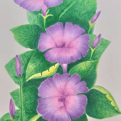 flowers , 8 x 11 inch, karishma  shah,8x11inch,thick paper,drawings,fine art drawings,pencil color,GAL03011445311
