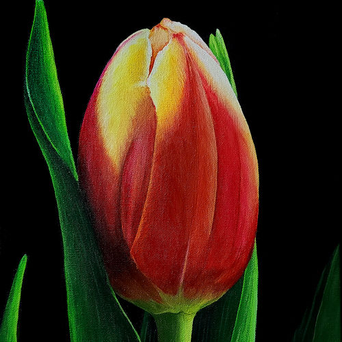 beautiful tulip, 12 x 24 inch, shobin george,12x24inch,canvas,paintings,wildlife paintings,flower paintings,foil paintings,landscape paintings,multi piece paintings,conceptual paintings,still life paintings,nature paintings   scenery paintings,cubism paintings,expressionism paintings,photorealism,realism paintings,realistic paintings,paintings for dining room,paintings for living room,paintings for bedroom,paintings for office,paintings for bathroom,paintings for kids room,paintings for hotel,paintings for kitchen,paintings for school,paintings for hospital,acrylic color,fabric,GAL02366345317