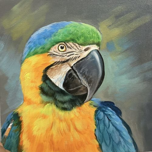 realistic macaw (artoholic), 24 x 24 inch, artoholic p,24x24inch,canvas,paintings,abstract paintings,wildlife paintings,nature paintings | scenery paintings,art deco paintings,cubism paintings,expressionism paintings,illustration paintings,impressionist paintings,minimalist paintings,photorealism paintings,photorealism,portraiture,realism paintings,surrealism paintings,animal paintings,realistic paintings,miniature painting.,paintings for dining room,paintings for living room,paintings for bedroom,paintings for office,paintings for kids room,paintings for hotel,paintings for kitchen,paintings for school,paintings for hospital,acrylic color,GAL02078845644