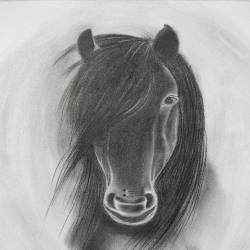 black beauty, 10 x 12 inch, divya bhagat,10x12inch,cartridge paper,paintings,abstract paintings,wildlife paintings,figurative paintings,realistic paintings,horse paintings,paintings for dining room,paintings for living room,paintings for bedroom,paintings for office,paintings for bathroom,paintings for kids room,paintings for hotel,paintings for kitchen,paintings for school,paintings for hospital,charcoal,graphite pencil,GAL0610346173