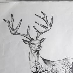 a deer through the jungle , 13 x 12 inch, maria tirkey,13x12inch,drawing paper,drawings,modern drawings,graphite pencil,GAL03320646200