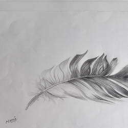 feather , 13 x 10 inch, maria tirkey,13x10inch,drawing paper,drawings,photorealism drawings,graphite pencil,GAL03320646207