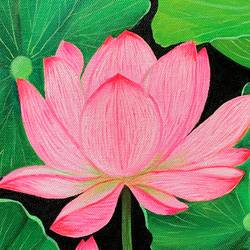 pink lotus, 12 x 12 inch, amita dand,12x12inch,canvas,paintings,flower paintings,paintings for dining room,paintings for living room,paintings for bedroom,paintings for office,paintings for hotel,paintings for hospital,acrylic color,GAL0146746349