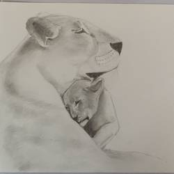 mother and baby lion, 8 x 11 inch, samuel manda,8x11inch,drawing paper,drawings,graphite pencil,GAL01224746524