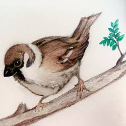my chirpy friend, 8 x 6 inch, debamitra dasgupta,8x6inch,canson paper,paintings,wildlife paintings,nature paintings | scenery paintings,paintings for kids room,paintings for hotel,paintings for school,paintings for hospital,pencil color,paper,GAL03371546789