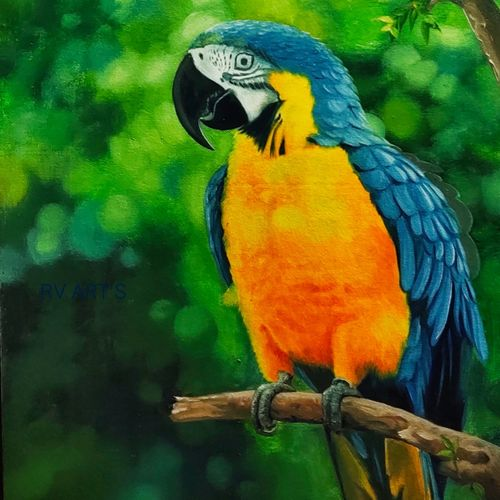 parrot, 18 x 24 inch, ramachandra l,18x24inch,canvas board,paintings,wildlife paintings,landscape paintings,modern art paintings,conceptual paintings,still life paintings,nature paintings   scenery paintings,illustration paintings,photorealism,realism paintings,realistic paintings,love paintings,paintings for dining room,paintings for living room,paintings for bedroom,paintings for office,paintings for bathroom,paintings for kids room,paintings for hotel,paintings for school,paintings for hospital,oil color,GAL03421247356