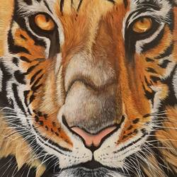 fearless, 24 x 36 inch, ahmed kamili,24x36inch,canvas,wildlife paintings,portrait paintings,animal paintings,acrylic color,oil color,GAL03409547400