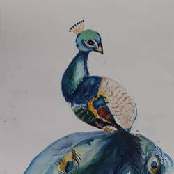 lovely peacock, 12 x 17 inch, sanju dubey,12x17inch,brustro watercolor paper,paintings,portrait paintings,portraiture,paintings for dining room,paintings for living room,paintings for bedroom,watercolor,GAL03382847427