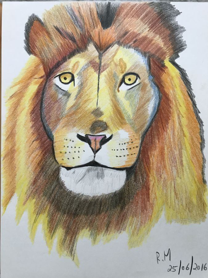 straight in his majesty's eyes, 8 x 12 inch, rohan  moorthy,realism drawings,paintings for living room,wildlife paintings,drawing paper,pencil color,8x12inch,GAL016884832
